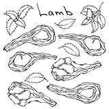 Raw Lamb Chop Ribs Set. Realistic Vector Illustration Isolated Hand Drawn Doodle or Cartoon Style Sketch. Fresh Meat Stock Photography