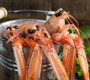 Raw langoustine in a bucket. With herbs on wood Royalty Free Stock Photos