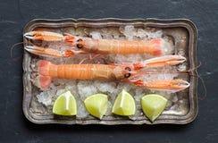 Raw langoustine on ice Royalty Free Stock Images