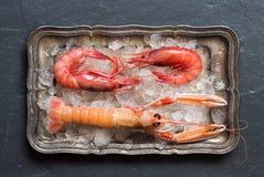 Raw langoustine and shrimps on ice Stock Photos