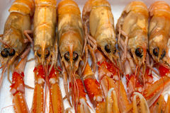 Raw Langoustines. In the market of Bokeria Stock Photo