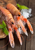 Raw langoustines on ice with basil Royalty Free Stock Photography