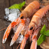 Raw langoustines on ice with basil Stock Images