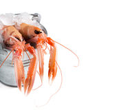 Raw langoustines on ice in a bucket Stock Image