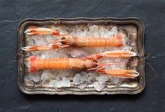 Raw langoustines on ice Stock Images