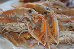 Raw langoustines Royalty Free Stock Images