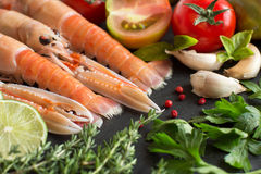 Raw langoustines with vegetables and herbs Royalty Free Stock Photography