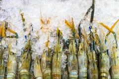 Raw large shrimps on ice at market.  royalty free stock photo