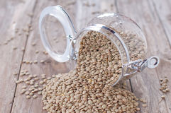 Raw lentil Royalty Free Stock Image