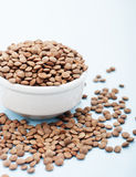 Raw lentil in white bowl Stock Images
