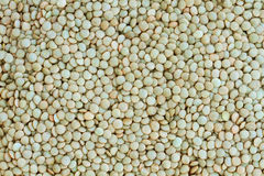 Raw Lentils Stock Image