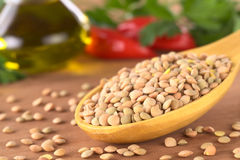 Raw Lentils Royalty Free Stock Photography
