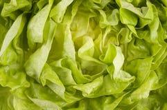 Raw lettuce food background Stock Image
