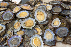 Raw limpets on display Stock Photography