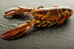 Raw lobster. On black stone background royalty free stock photo
