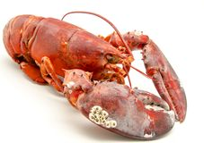 Raw lobster Stock Photography