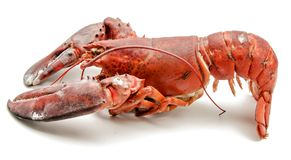 Raw lobster Royalty Free Stock Image