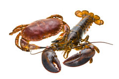 Raw Lobster and Crab Royalty Free Stock Photography