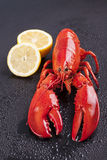 Raw lobster isolated Royalty Free Stock Images