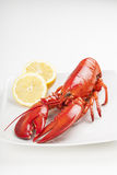 Raw lobster  Royalty Free Stock Photography