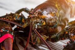 Raw lobster's head. Mouth and eyes of lobster. Seafood week in local restaurant. Fresh catch from the ocean Royalty Free Stock Photography