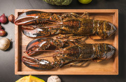 Raw lobster on wooden plate Stock Photography