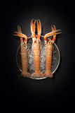 Raw Lobsters On Ice Royalty Free Stock Photos
