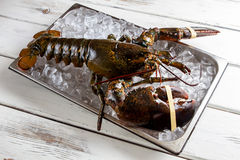 Raw lobsters laying on ice. Royalty Free Stock Photography