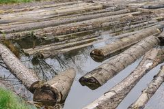 Raw logs floating down the river royalty free stock images