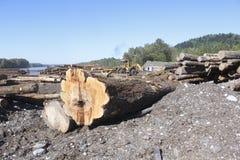 Raw Logs in Lumber Yard Stock Images