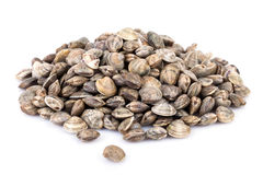 Raw Lupins Clams Stock Photography