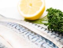 Raw mackerel filet Stock Image