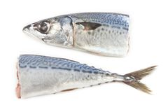 Raw Mackerel fish Stock Images