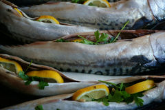 Raw mackerel fish background. Raw mackerel fishes as nice food background Stock Photo