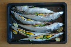 Raw mackerel fish background. Raw mackerel fishes as nice food background Stock Photography