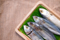 Raw mackerel fish on banana leaf Stock Photography