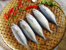 Raw mackerel fish on basket wood.  Stock Image