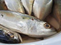Raw mackerel fish. In bowl Stock Photography