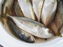 Raw mackerel fish in bowl. Raw mackerel fish in white bowl Royalty Free Stock Image