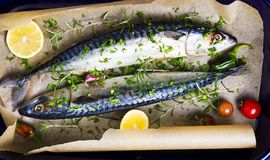 Raw mackerel fish with cooking ingredients on a pan. Raw mackerel fish with cooking ingredients on a baking pan Stock Photos