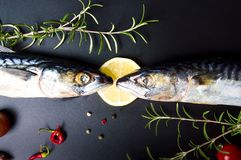Raw mackerel fish and cooking ingredients. On dark table Royalty Free Stock Image