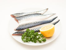 Raw mackerel fish filet. On white plate with half a lemon and parsley Royalty Free Stock Images