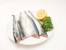 Raw mackerel fish filet. On white plate with half a lemon and parsley Stock Photos
