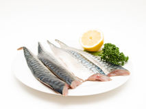 Raw mackerel fish filet. On white plate with half a lemon and parsley Stock Photography