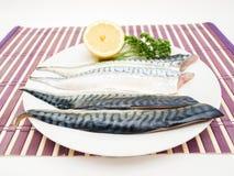 Raw mackerel fish filet Royalty Free Stock Photography