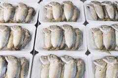 Raw mackerel fish on foam tray at market. In thailand Royalty Free Stock Images