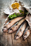 Raw mackerel fish. Just brought from market Stock Photography