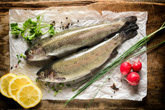 Raw mackerel fish. On the paper from above Royalty Free Stock Image