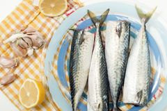 Raw mackerel fish. On a plate Stock Images