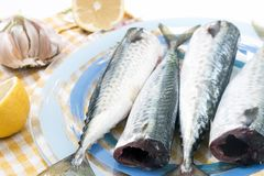 Raw mackerel fish. On a plate Royalty Free Stock Photography
